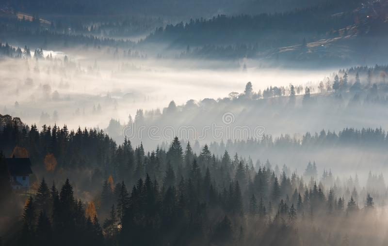 First sunrise rays of sun in Carpathian mountains. stock photo