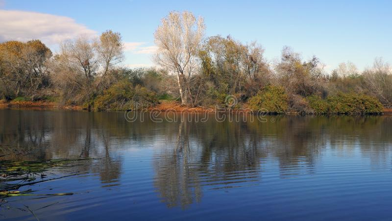 The First To Change. Autumn, water, seasonal, winter, desert, arizona, vgphotoz, trees, image, mirror, nature, natural, dry, sky, blue, green, orange stock image