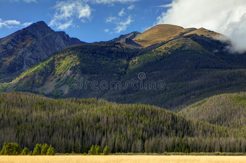 First Trees Turning, Rocky Mountain National Park, Colorado, USA. Small patches of Aspens at the highest elevations start to show the yellow of another fall royalty free stock photo