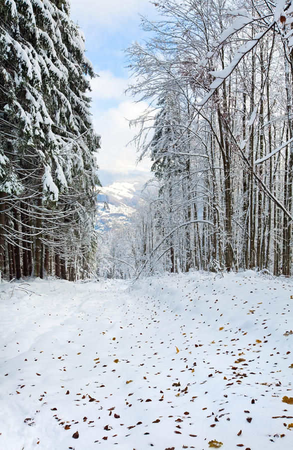 Free First Winter Snow And Last Autumn Leafs In Forest Stock Photography - 18693382