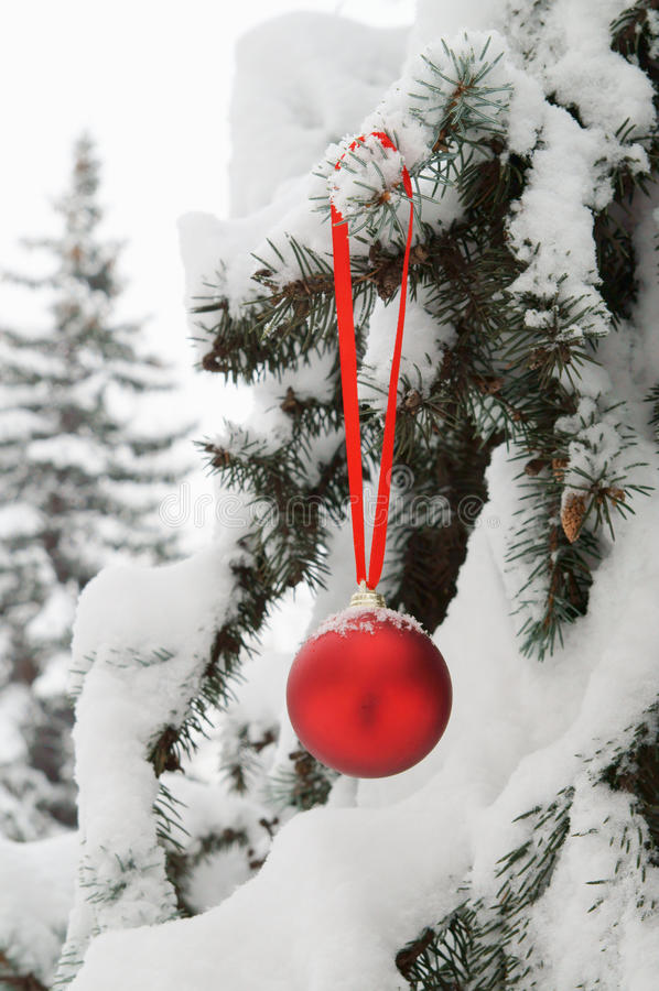 Firtree with red christmas ball royalty free stock photo