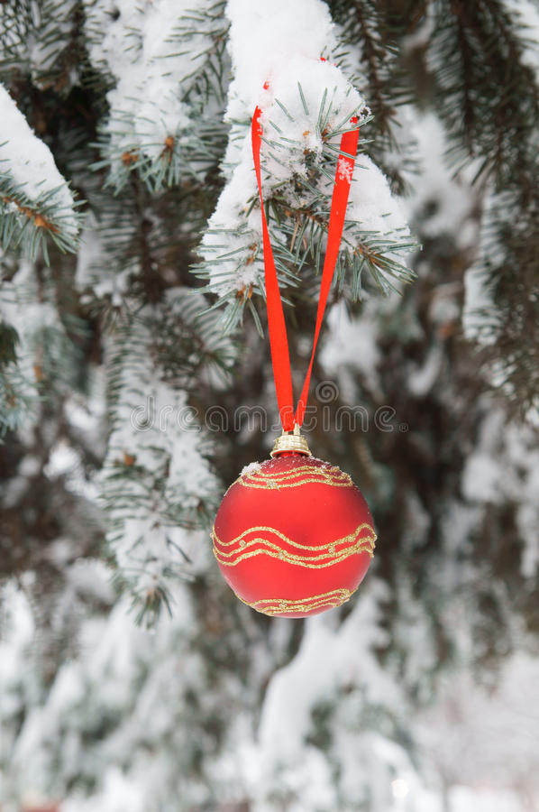 Firtree with red christmas ball royalty free stock images