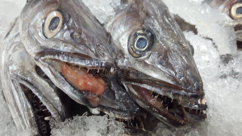 Fisch royaltyfri fotografi