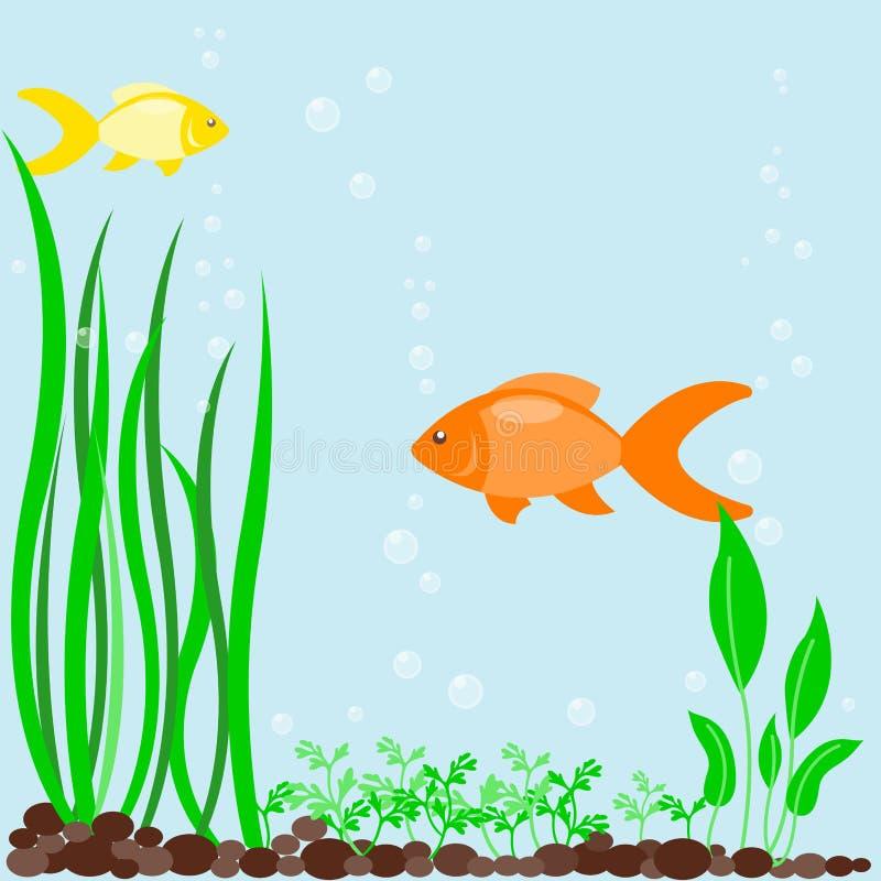 FISCH-Algenanlagen des transparenten Aquariumseewasserhintergrundvektorillustrationslebensraum-Wasserbehälter-Hauses Unterwasser stock abbildung