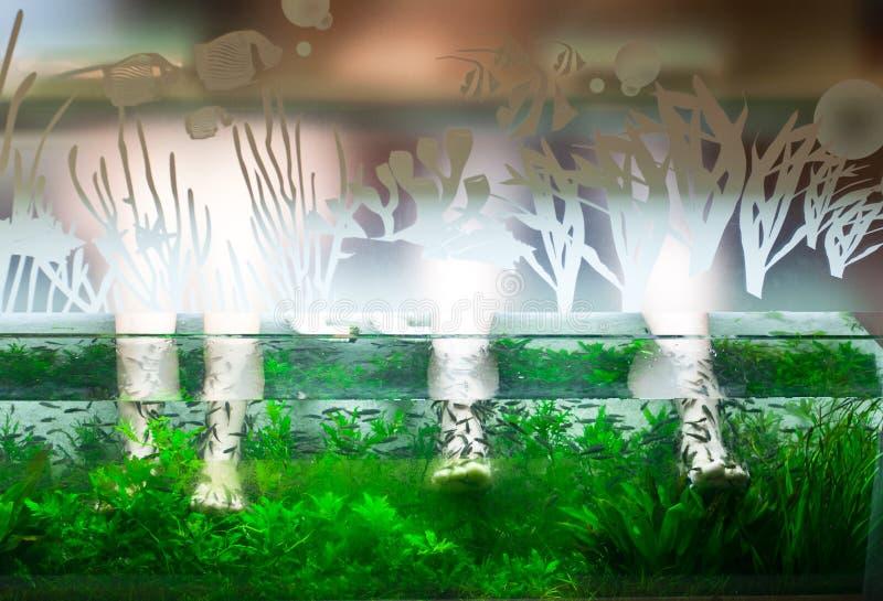Fisch-Badekurort stockbild