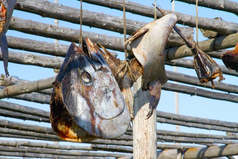 Fisch geht Trockner auf Holzregalen voran lizenzfreies stockbild