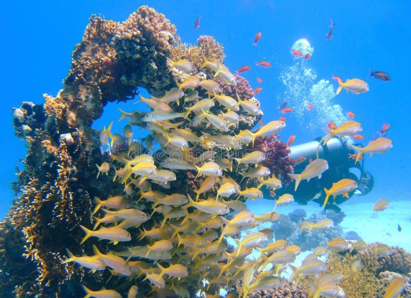 Fisch- und Unterwasseratemgerättaucher um einen Felsen stockbild