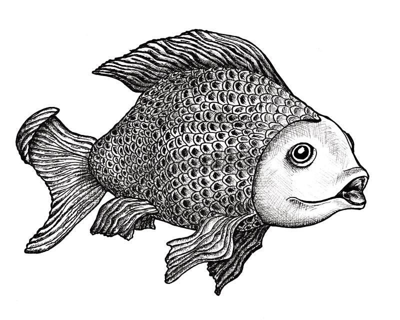 Fisch-Zeichnung vektor abbildung