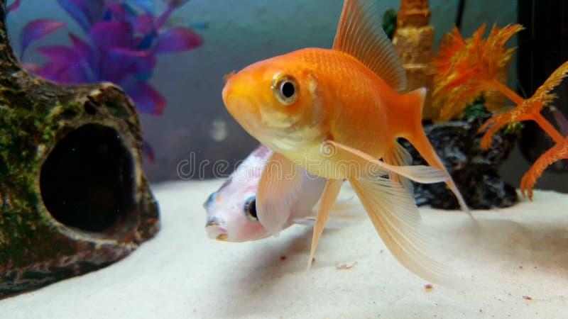 Fischaquarium lizenzfreie stockfotografie