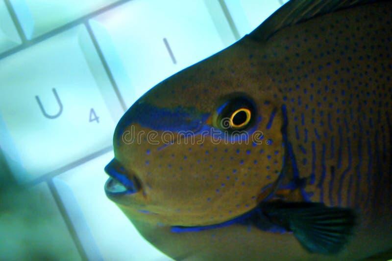 Fischartige Tastatur Stockbild