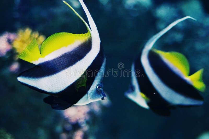Fischclown stockfoto