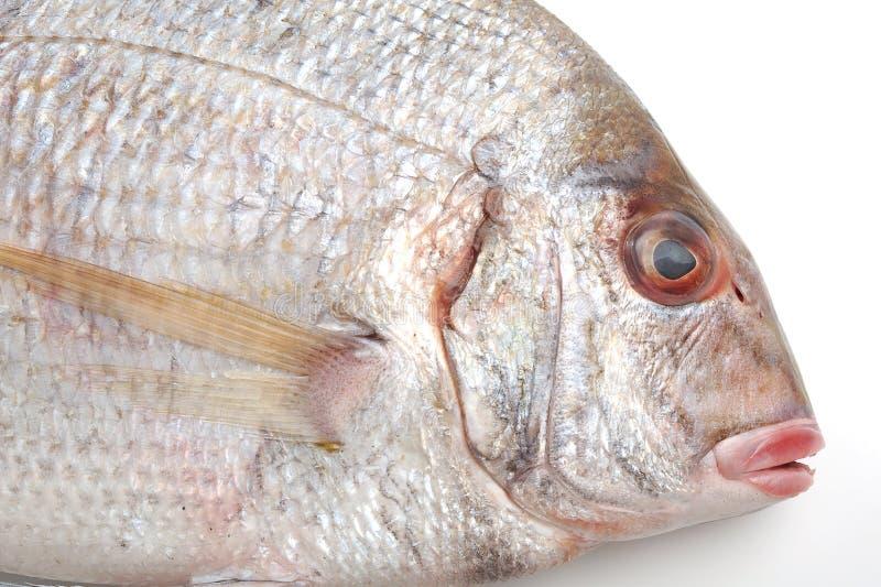 Download Fische stockfoto. Bild von frische, nave, fleisch, meer - 27727750