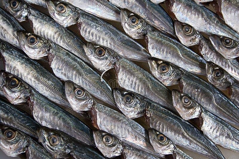Fische stockbilder