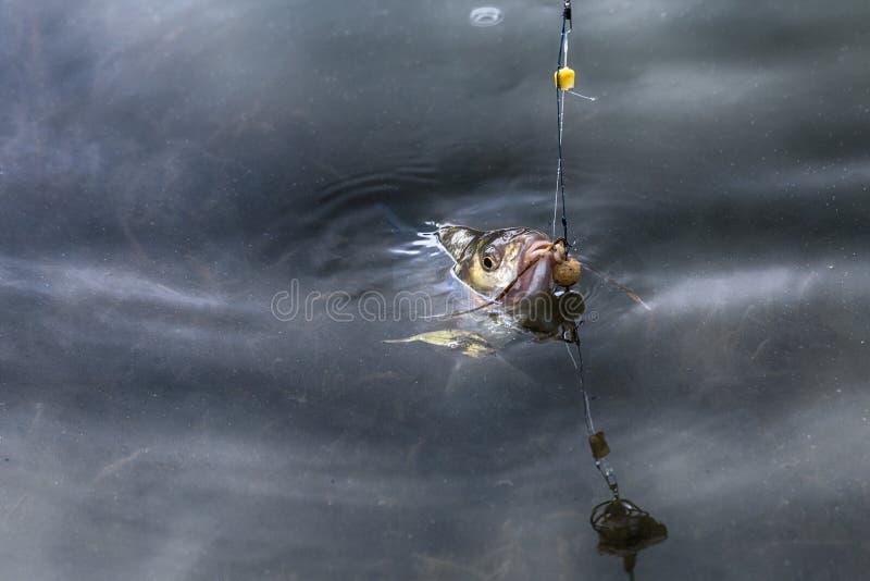 Fische auf dem Haken stockfoto
