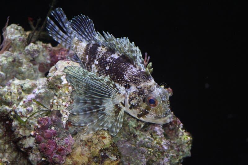 Fische auf der Koralle. stockfotos