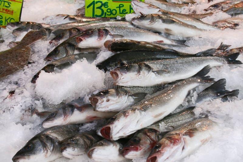 Fische auf einem Markt stockfoto