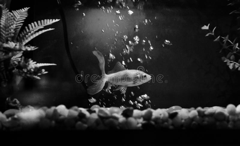 Fische in den Blasen stockbilder