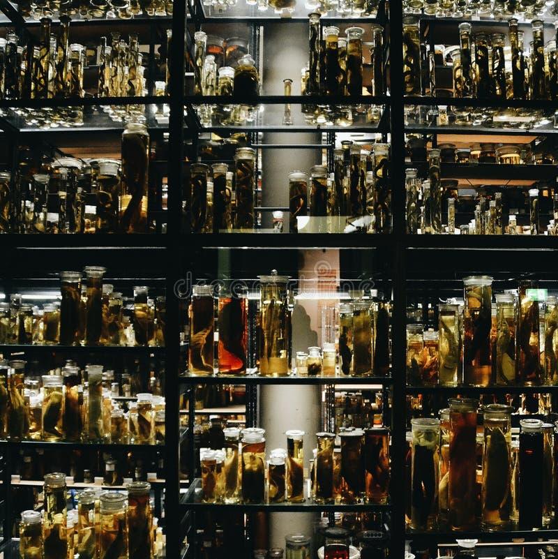 Fische in den Gläsern lizenzfreie stockfotografie