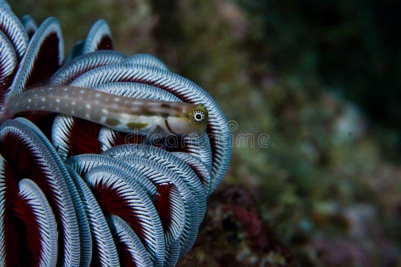 Fische in der Koralle lizenzfreie stockbilder