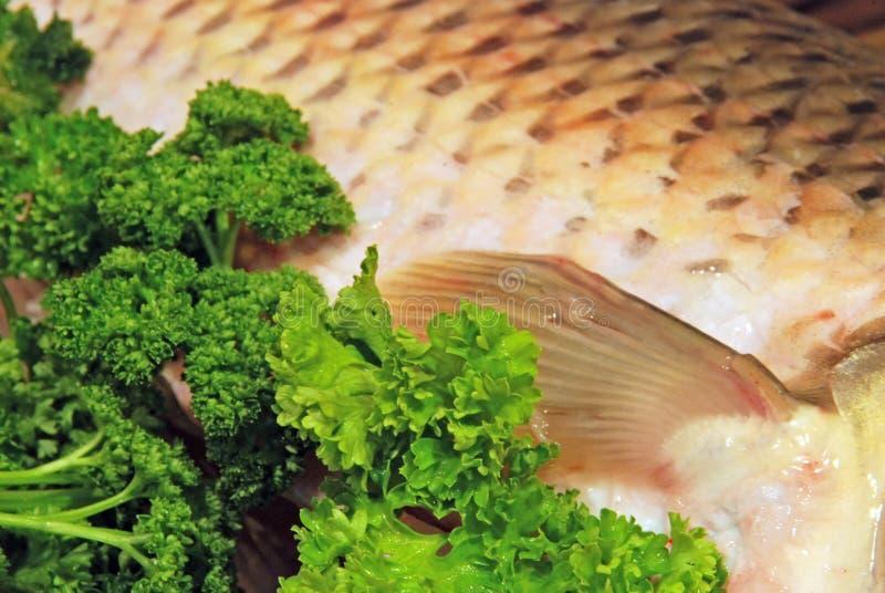 Fische in der Petersilie lizenzfreies stockbild