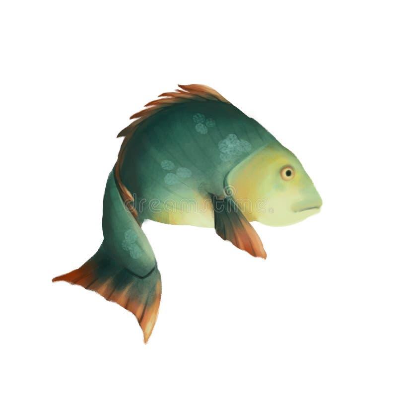 Fische des blauen Grüns Karpfen oder crucian lokalisiert auf weißem Hintergrund vektor abbildung