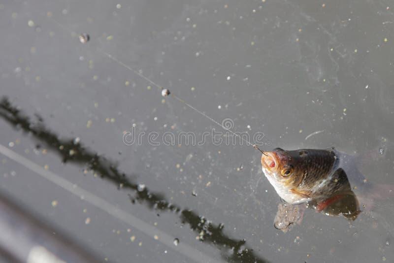 Fische gefangen auf Haken stockbild