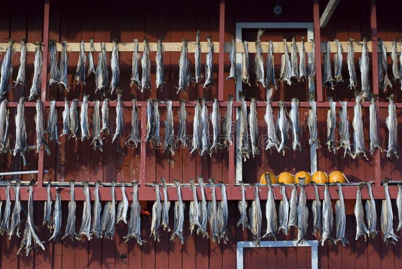 Fische gehangen, um zu trocknen stockfotos