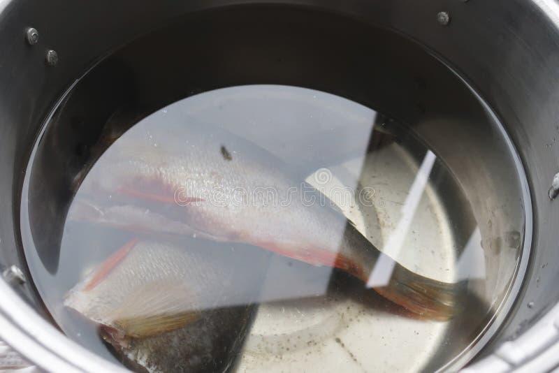 Fische gelegen in einem Topf Wasser lizenzfreie stockfotografie