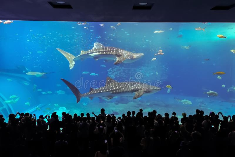 Fische im Aquarium in Okinawa-Stadt lizenzfreies stockfoto