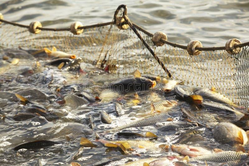 Fische im Fishnet lizenzfreie stockbilder