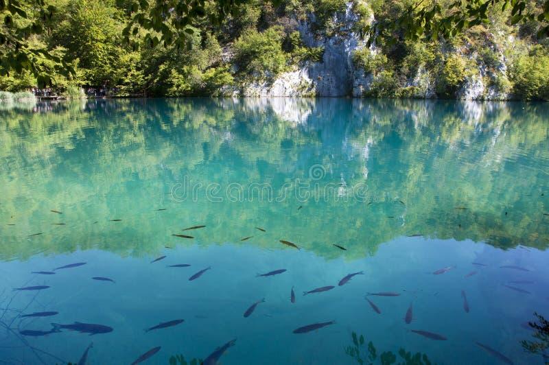 Fische im klaren Türkiswasser stockfotografie