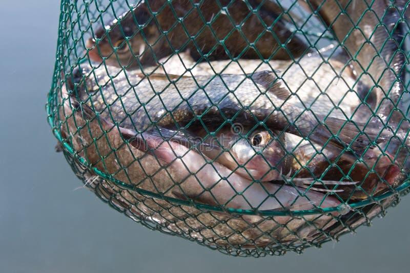 Fische im Netz lizenzfreie stockfotografie