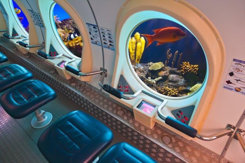 Fische im Unterwasserfenster stockfotos