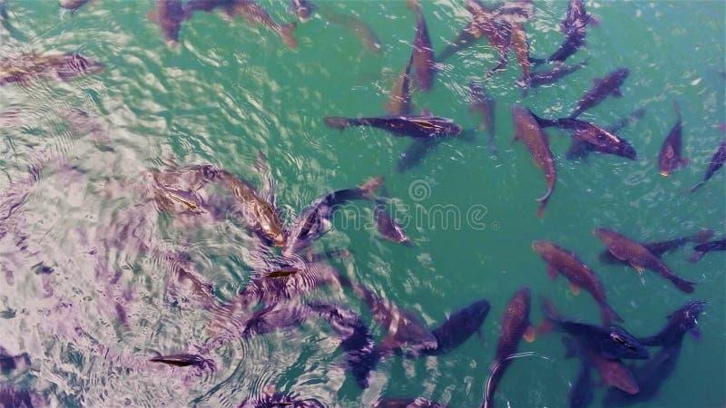 Fische im Wasser stockfoto
