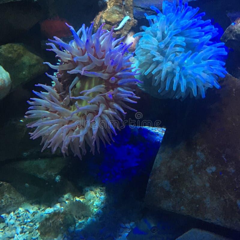 Fische, Meerespflanzen, Luftblasen lizenzfreies stockfoto