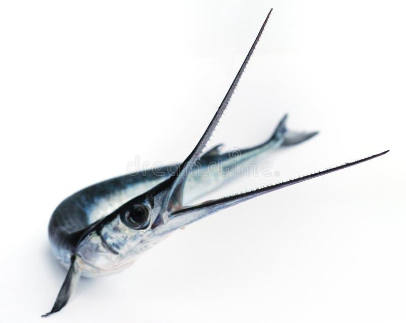 Fische sahen stockbild