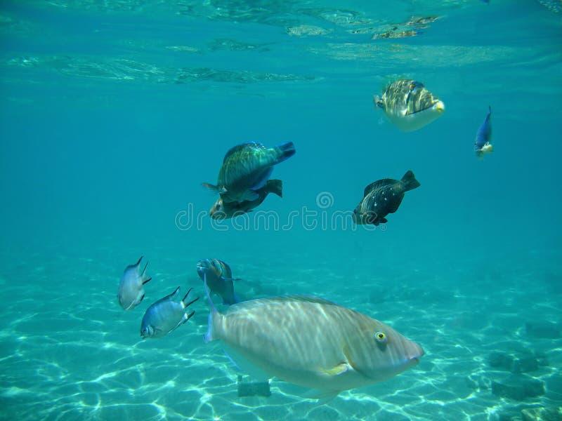 Fische schier ein ein stockbilder