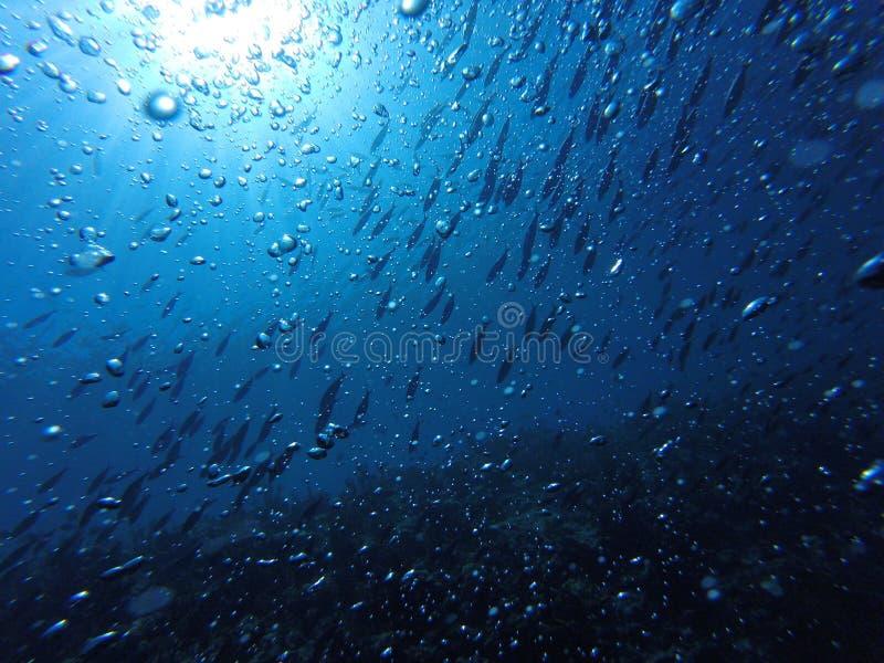 Fische und Blasentanz lizenzfreie stockbilder