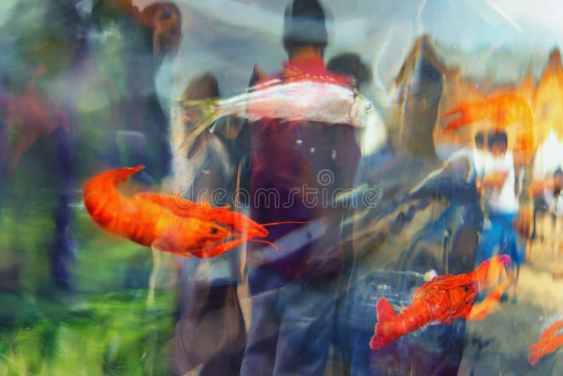 Fische und Garnele im Eis lizenzfreies stockfoto