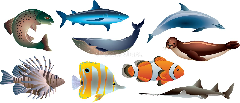 Fische und Meeresflora und -fauna-Satz lizenzfreie abbildung