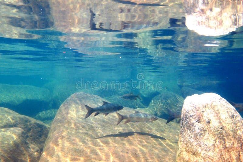 Fische unter dem Wasserfall lizenzfreie stockfotografie
