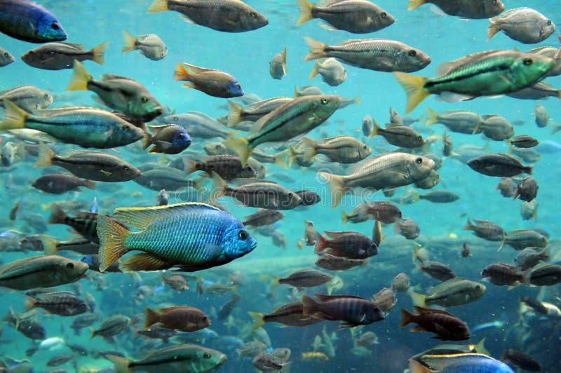 Fische Unterwasser stockfoto