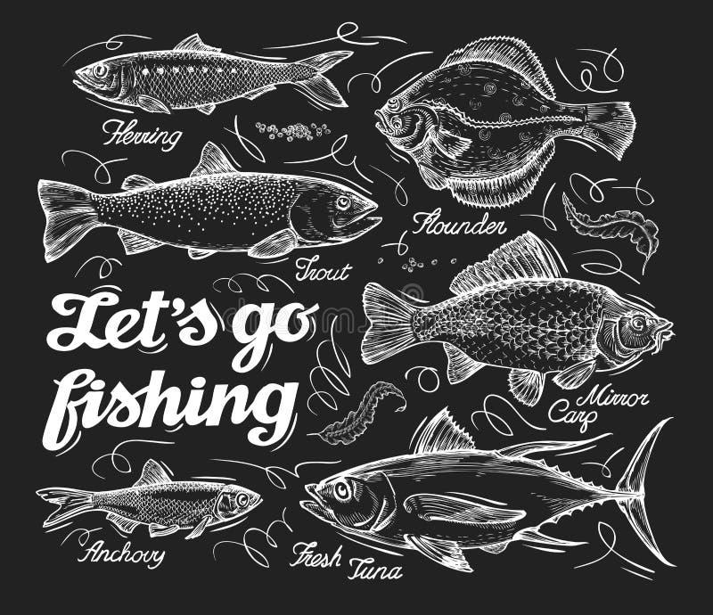 fischen Übergeben Sie gezogene Skizzenfische, Heringe, Forelle, Scholle, Karpfen, Thunfisch, Sprotte Auch im corel abgehobenen Be lizenzfreie abbildung