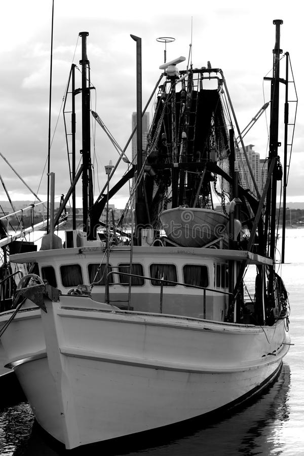 Fischen Gold Coast stockbild