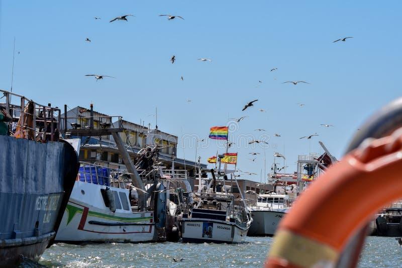 Fischen-Manie stockfotografie