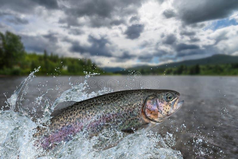 fischen Regenbogenforellefische, die mit dem Spritzen im Wasser springen stockfotos