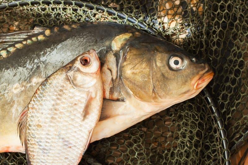 Fischen Sie auf Nettokorb, Konzept der Landerholung stockfotos