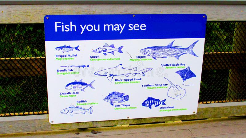 Fischen Sie Sie kann Blau- und Weißmetallzeichen sehen lizenzfreie stockbilder