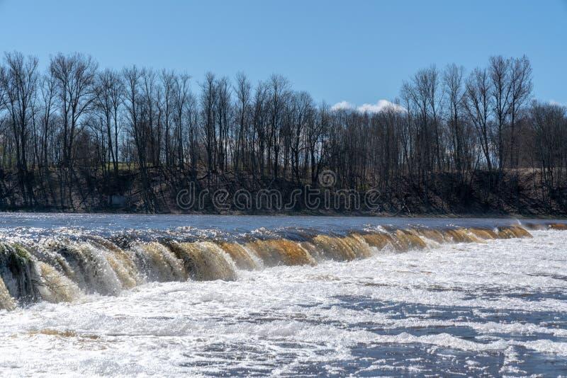 Fischen Sie oben in Wasserfall gegen den Strom springen und das Laichen anstreben stockfotos