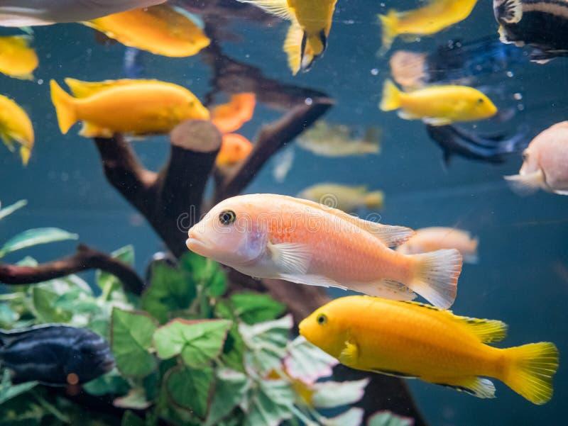 Fischen Sie Schwimmen in den Aquarien des berühmten SeaWorld lizenzfreie stockbilder
